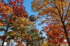 Árboles en otoño en la reina Elizabeth Olympic Park, Londres, fotos de archivo