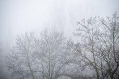 Árboles en paisaje de niebla del paisaje del invierno Imagen de archivo libre de regalías