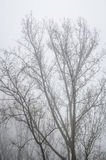 Árboles en paisaje de niebla del paisaje del invierno Fotografía de archivo libre de regalías