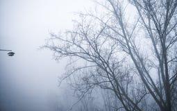 Árboles en paisaje de niebla del paisaje del invierno Imágenes de archivo libres de regalías