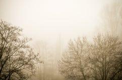 Árboles en paisaje de niebla del paisaje del invierno Imagenes de archivo