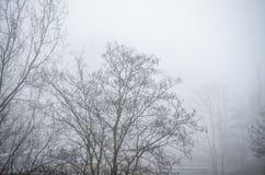 Árboles en paisaje de niebla del paisaje del invierno Imagen de archivo
