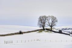 Árboles en paisaje hivernal Imagenes de archivo
