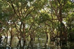 Árboles en pantano Foto de archivo libre de regalías