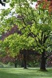 Árboles en parkland inglés Imagen de archivo libre de regalías