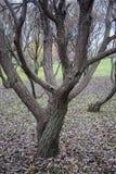 Árboles en parque Fotografía de archivo