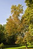 Árboles en parque Imagenes de archivo