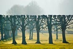 Árboles en parque Fotos de archivo libres de regalías