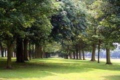 Árboles en parque Foto de archivo libre de regalías