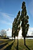 Árboles en parque cerca del lago Fotografía de archivo libre de regalías