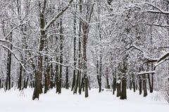 Árboles en parque del invierno Imagen de archivo libre de regalías