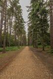 Árboles en parque negro Foto de archivo libre de regalías