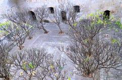Árboles en patio en monasterio en Oaxaca foto de archivo libre de regalías