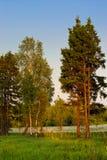 Árboles en prado en luz de la puesta del sol Fotografía de archivo