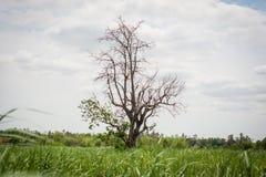 Árboles en prados amplios Imagenes de archivo