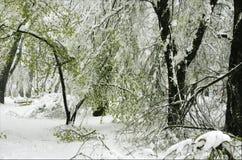 Árboles en primavera debajo de la nieve Foto de archivo libre de regalías