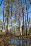 Árboles en primavera temprana del bosque fotografía de archivo