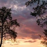 Árboles en puesta del sol Imágenes de archivo libres de regalías