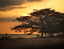 Árboles en puesta del sol foto de archivo