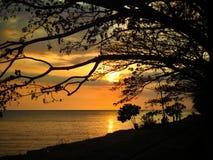 Árboles en puesta del sol imagen de archivo