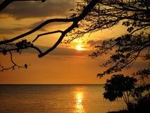 Árboles en puesta del sol fotografía de archivo