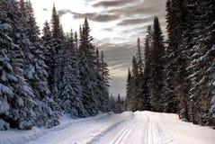 Árboles en Quebec Imagen de archivo libre de regalías