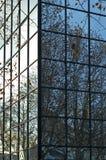 Árboles en rectángulo de A Fotografía de archivo