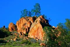 Árboles en roca en los pináculos NP Fotografía de archivo