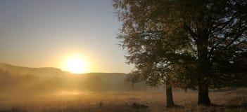 Árboles en salida del sol del otoño Imagen de archivo
