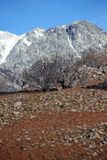 Árboles en Sierra de Gredos Fotos de archivo libres de regalías
