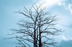 Árboles en silueta en fondo del cielo azul Fotografía de archivo libre de regalías