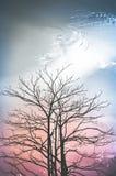 Árboles en silueta en fondo del cielo azul Fotografía de archivo