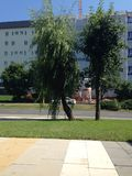Árboles en Tuzla Fotos de archivo