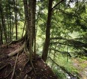 Árboles en un acantilado Imagen de archivo libre de regalías