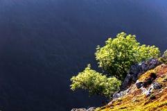 Árboles en un acantilado Fotos de archivo libres de regalías