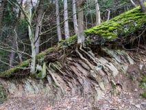 Árboles en un borde quebrado del terreno en la mina en Bromberg Fotos de archivo