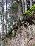Árboles en un borde quebrado del terreno en la mina en Bromberg Imagen de archivo libre de regalías