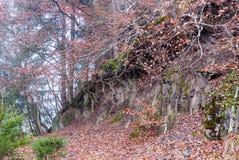 Árboles en un borde quebrado del terreno en la mina en Bromberg Imágenes de archivo libres de regalías