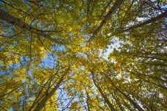 Árboles en un bosque Foto de archivo libre de regalías