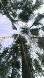 Árboles en un bosque Imagen de archivo libre de regalías