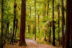 Árboles en un bosque de madera rojo fotos de archivo