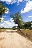Árboles en un camino de tierra fotografía de archivo libre de regalías