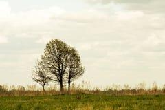 Árboles en un campo Imágenes de archivo libres de regalías