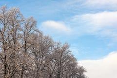 Árboles en un día de invierno frío Fotografía de archivo libre de regalías
