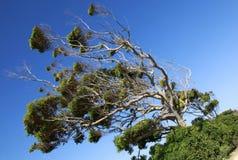 Árboles en un día de verano caliente Imagen de archivo libre de regalías