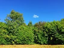 Árboles en un día soleado fotos de archivo