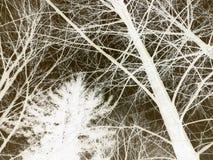 Árboles en un efecto negativo imagen de archivo