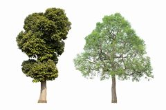 2 árboles en un fondo blanco Fotos de archivo libres de regalías