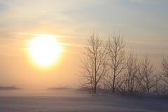 Árboles en un fondo de la puesta del sol Imagenes de archivo