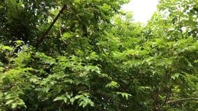 Árboles en un fondo del cielo Conducción de la vespa Capturado de la moto con el stadycam asia almacen de video